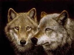 Webinar: Welchen Wolf fütterst Du?  30min Webinar + ca 60 min pers. online Einzel-Coaching