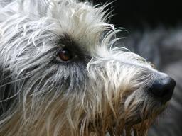 Webinar: Angsthunde ONLINE - eine Webinarreih(s)e
