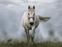 Webinar: Angelaufene Pferdebeine und schmieriges Fell - wenn die Milz schwächelt