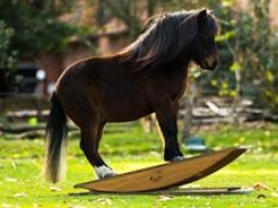 Webinar: Pferdewippen-Training