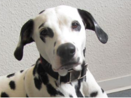 Webinar: praktische Fallbesprechung für Hundeernährungsberater