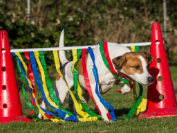 Webinar: Crossdogging für Hundetrainer