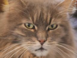 Webinar: Tierheilpraktik mit der Medionik für Hund und Katze