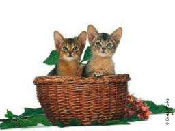Webinar: Bachblüten für meine Katze