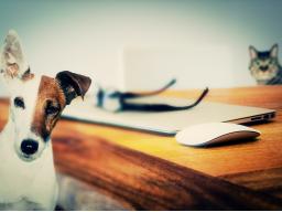 Webinar: Mit Tieren sprechen? Na klar :-)