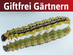 Webinar: Schädlinge im Garten: So lösen sie die häufigsten Probleme super einfach