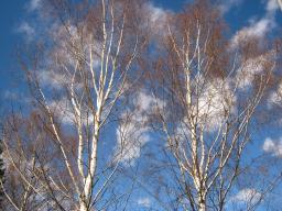 Webinar: Geheimnisvolles Finnland