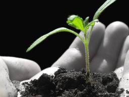 Webinar: 21.6.12 So entwickeln Sie ein gutes unternehmerisches Konzept