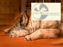 Webinar: Arthrose beim Hund - Wie entsteht sie? Was kann ich tun?