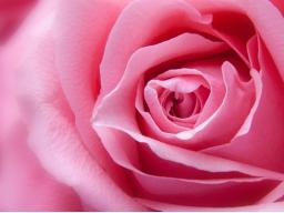 Webinar: Kostenlos: Wie verbringen Sie Ihren Valentinstag allein und glücklich?