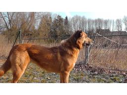 Webinar: Ein Hund aus dem Tierheim?