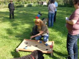 Webinar: Hundetraining macht Spaß