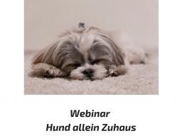 Webinar: Hund entspannt allein Zuhause