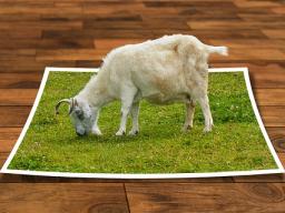 Webinar: Bildbearbeitung mit GIMP - mit wenigen Schritten zum besseren Foto