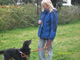 Webinar: Hundetraining: Strafen? Nein, danke!