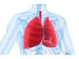Webinar: Heilung aus eigener Kraft  Lunge
