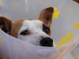 Webinar: Fälle aus der Tierheilpraxis Patient: Hund