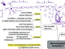 Webinar: Heilpraktiker werden - Mit Mindmaps erfolgreich lernen (Hormonsystem, Nervensystem)