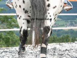 Webinar: Die natürliche Schiefe - wie sie dein Pferd beeinflusst und was du dagegen tun kannst!
