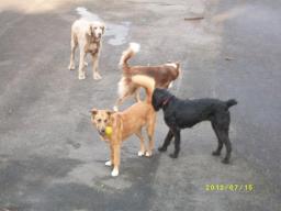 Webinar: Ausdrucksverhalten Hund