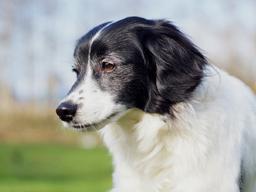 Webinar: Endokrine Erkrankungen beim Hund: Schilddrüse, Cushing & Co.