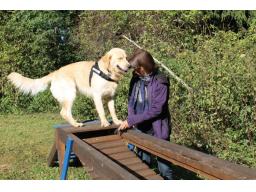 Webinar: Sinnvolle Beschäftigung für den Hund