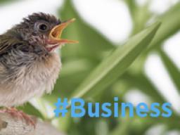 Webinar: Twitterkurs BUSINESS