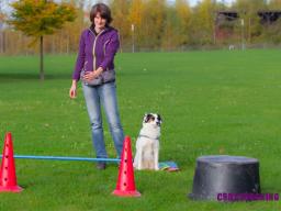 Webinar: Crossdogging für Hundetrainer - Optimierung der Stunde