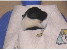 Webinar: 1. Hilfe am Hund - Teil 1