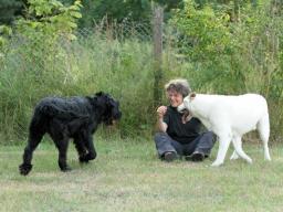 Webinar: Was hast du gesagt?  - 2. Teil Warum Hunde nicht hören, weil Menschen zu viel reden