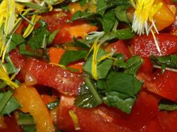 Webinar: Wildkräuter in unserer Ernährung - Vitalstoffe