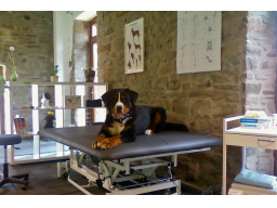 Webinar: Hundephysiotherapie: der Untersuchungsgang