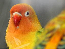 Webinar: Wildkräuter in der Tierernährung - Vögel