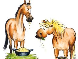 Webinar: Fellwechsel beim Pferd sinnvoll unterstützen - Sonnenwend-Webinar