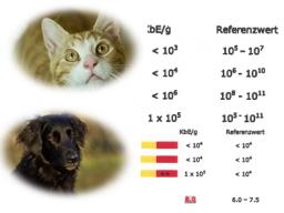 Webinar: Die Darmflora Hund und Katze