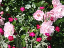 Webinar: Blütengarten
