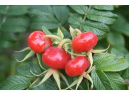Webinar: Wilde Früchte lecker zubereiten