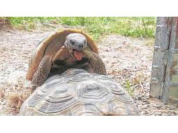 "Webinar: Das ""Turtle Sponsering"""