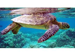 Webinar: Rohstoff-Trading Trendfolgesysteme - Die Turtles Strategie