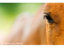 Webinar: Farblicht für Tiere - eine Einführung