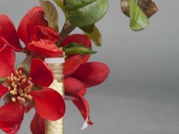 """Webinar: Einführung in die C4-homöopathische Baumapotheke """"Barbara-Blüten"""""""
