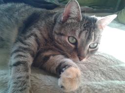 Webinar: B.A.R.F. für Katzen - Eine Einführung