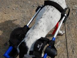 Webinar: Der Hunderollwagen