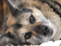 Webinar: Info: Tiere, Tod & Trauer