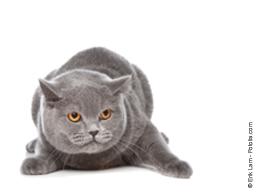 Webinar: Meine Katze ist aggressiv