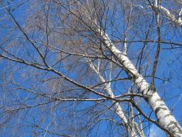 Webinar: Geheimnis Finnland