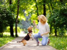 Tricksen mit dem Hund - Teil 2