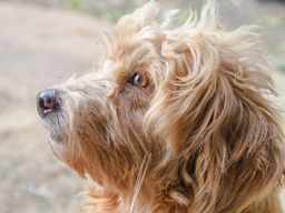 Webinar: Arbeitsgruppe THP & Tier-Ernährungsberater (Hund / Katze)