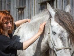 Webinar: Akupressur am Pferd, Teil I