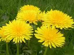 Webinar: Die Kraft unserer Heilpflanzen - Teil 1